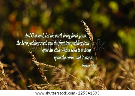 """Genesis 1:11 """"And God said, Let the earth bring forth grass, the herb yielding seed, and the fruit tree yielding fruit after his kind, whose seed is in itself, upon the earth: and it was so"""" KJV Bible - stock photo"""