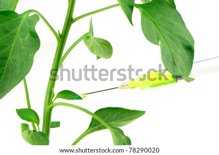 Genetic engineering of a plant using chemical injection - stock photo