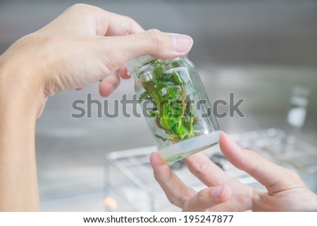 Genetic experiments plant in the lab.  - stock photo