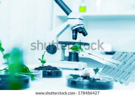 Genetically modified plant tested in petri dish .Ecology laboratory. - stock photo