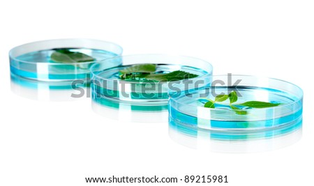 Genetically modified plants tested in petri dishes on gray background - stock photo