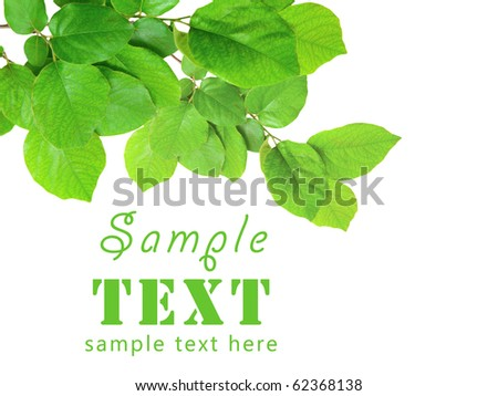 Gentle green branch isolated on a white background - stock photo