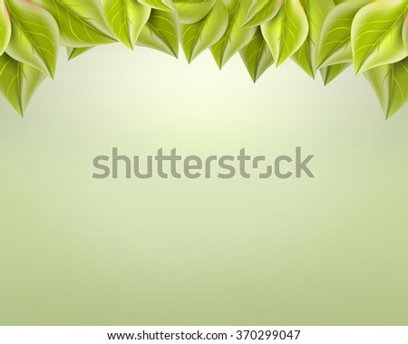 gentle green  leaves on a light background - stock photo