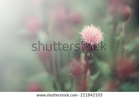 gentle light field flowers vintage romantic background - stock photo