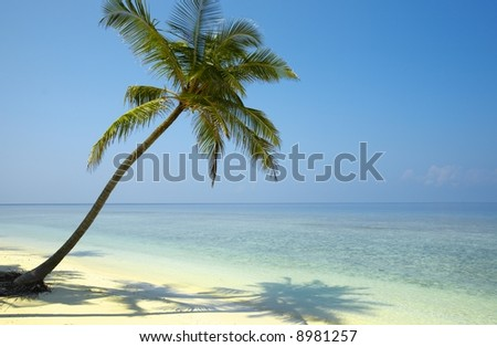 Gentle seascapeI with palmtree on a beach - stock photo