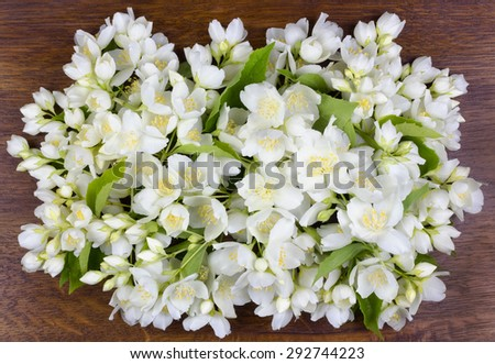 Gentle white jasmine on the ancient polished wooden oak panel - stock photo