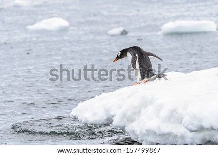 Gentoo penguin (Pygoscelis papua) on the edge of iceberg - stock photo