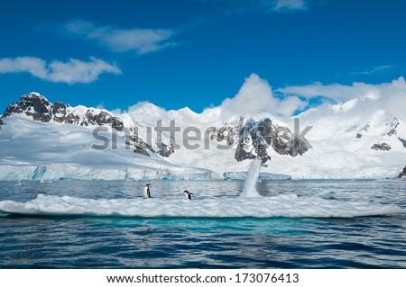 Gentoo penguins on iceberg Antarctica - stock photo