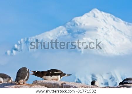 Gentoo Penguins on rock near Port Lockroy, Antarctica - stock photo
