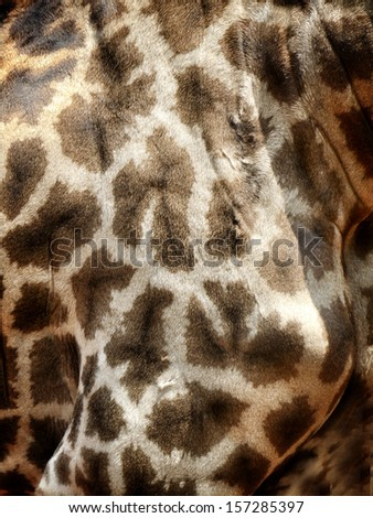 genuine leather skin of giraffe - background - stock photo