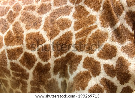 Genuine leather skin of giraffe with light and dark brown spots. - stock photo