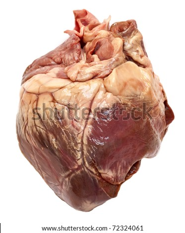 Genuine swine heart isolated on white background. Very similar to human heart. - stock photo