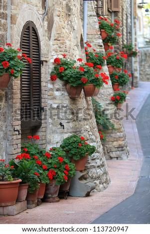 Geranium flowers in streets of Assisi, Umbria, Italy, Europe - stock photo