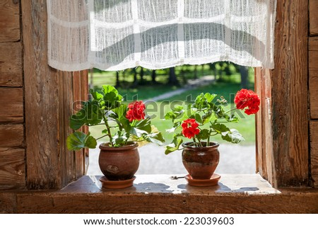 Geranium flowers on the window of rural wooden house on a sunny day - stock photo