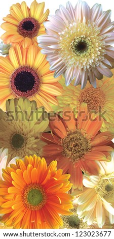 Gerber collage from soft pastel color flowers - stock photo