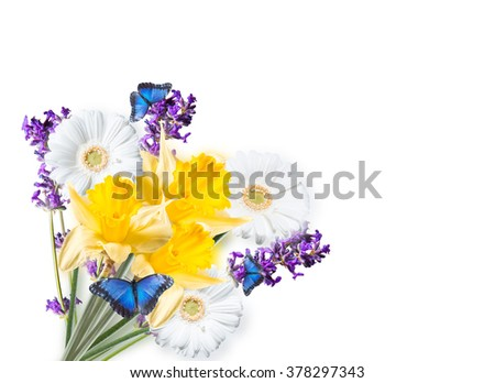 Gerber Daisy,narcissus, lavender and butterfly isolated on white background - stock photo
