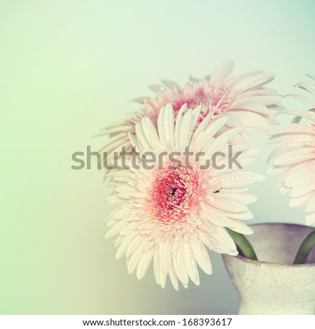 Gerber Flowers  - stock photo