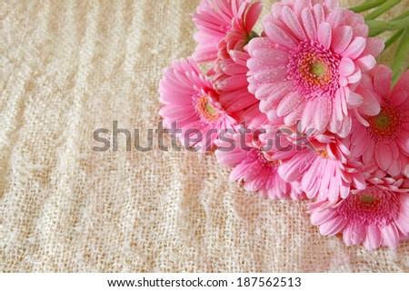 Gerber flowers, birthday card. - stock photo