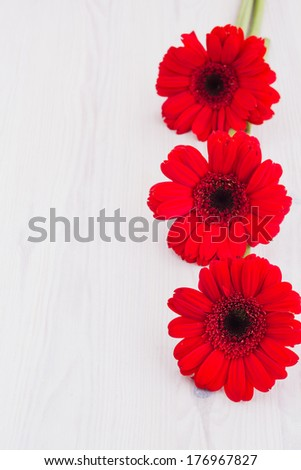 Gerber flowers on a wooden surface with copy space, selective focus - stock photo