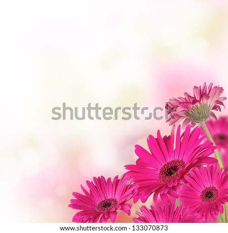 Gerber flowers with free space for text - stock photo