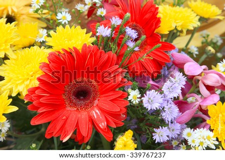 gerbera bloom with red petals from close. The picture is taken in a Dutch nursery specialized in the cultivation of Gerbera cut flowers. - stock photo