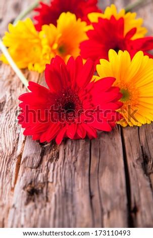 gerbera daisies on wood - stock photo