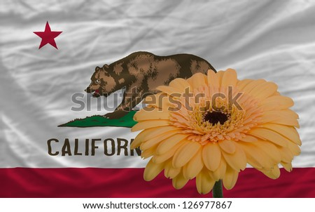 gerbera daisy flower and flag of us state of california as concept and symbol of love, beauty, innocence, and positive emotions - stock photo