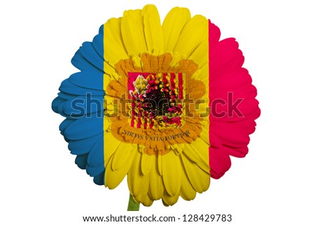 gerbera daisy flower in colors national flag of andorra on white background as concept and symbol of love, beauty, innocence, and positive emotions - stock photo