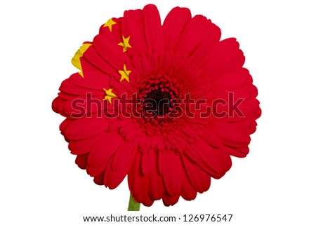 gerbera daisy flower in colors national flag of china on white background as concept and symbol of love, beauty, innocence, and positive emotions - stock photo