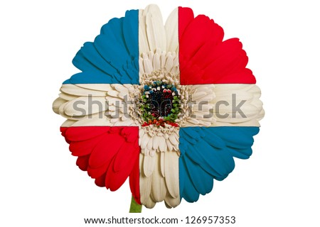 gerbera daisy flower in colors national flag of dominican on white background as concept and symbol of love, beauty, innocence, and positive emotions - stock photo
