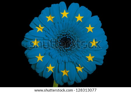 gerbera daisy flower in colors national flag of europe on black background as concept and symbol of love, beauty, innocence, and positive emotions - stock photo