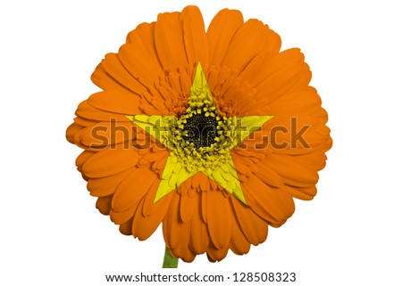 gerbera daisy flower in colors national flag of vietnam on white background as concept and symbol of love, beauty, innocence, and positive emotions - stock photo