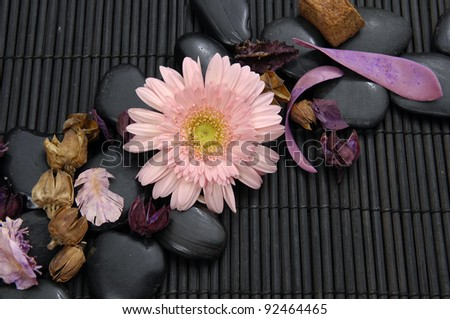 gerbera flower and flower dried petals on pebbles - stock photo