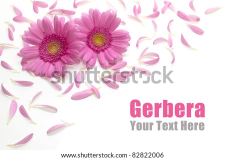 Gerbera frame. Flower arrangement - stock photo