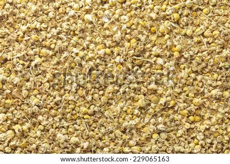 German chamomile - stock photo