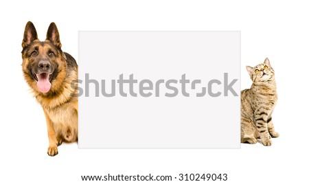 German Shepherd and cat Scottish Straight peeking from behind a poster - stock photo