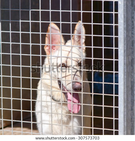 German Shepherd dog in kennel at Dog Rescue centre - stock photo