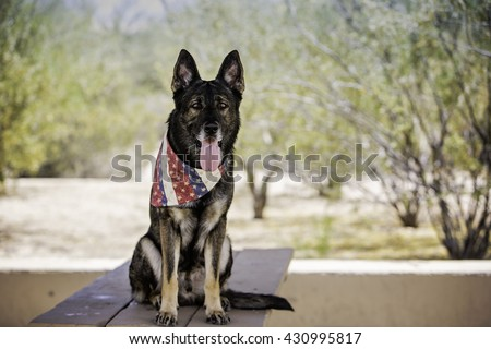 German shepherd dog sitting on a table at the park while wearing patriotic bandana - stock photo