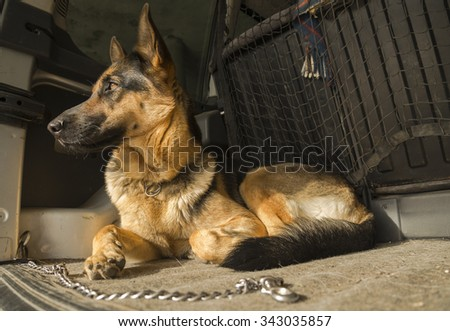 German shepherd in the car - stock photo