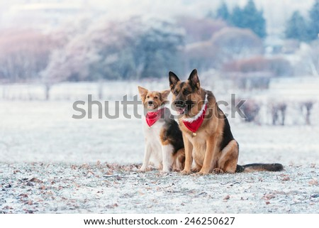 German Shepherd is sitting with other dog - stock photo
