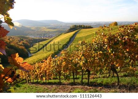 German vineyard - stock photo