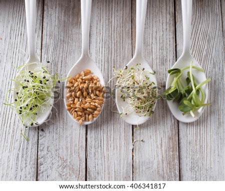 germinated seeds of alfalfa, wheat, onions, sunflower - stock photo