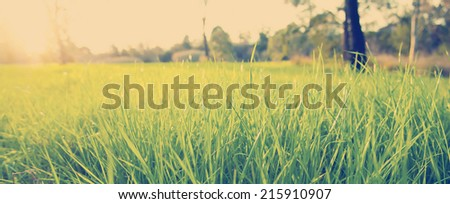 Getting eye level on lush green grass with the bright sun behind with Instagram style filter - stock photo