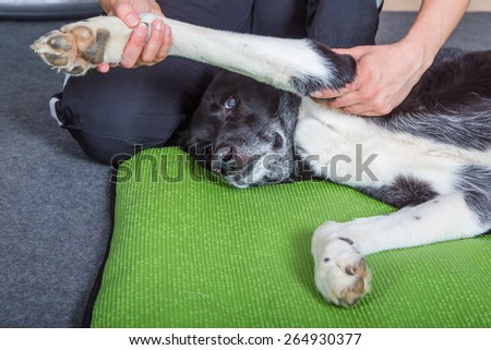 getting physical therapy - stock photo