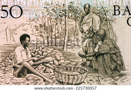 GHANA - CIRCA 1980: Men Splitting Cacao Pots on 50 Cedis 1980 Banknote from Ghana. - stock photo