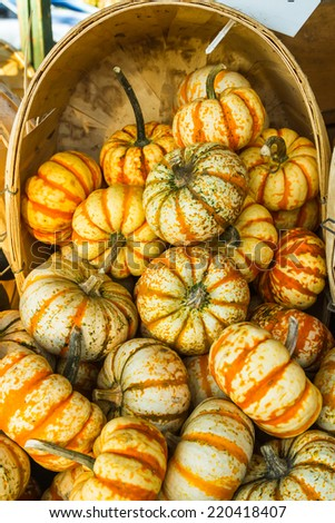 Ghost Rider Squash/ Ghostrider is a variety of Winter squash - stock photo