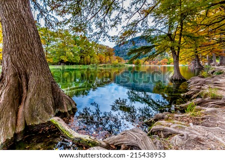 Giant Cyprus Trees with Beautiful Fall Foliage Surrounding the Clear Frio River, Texas. - stock photo