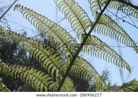 Giant Fern Frond - stock photo