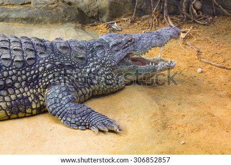 giant Nile crocodile with its huge open mouth (Crocodylus niloticus) - stock photo