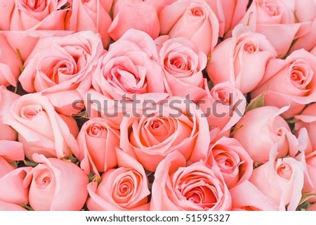 Giant Roses Bouquet - stock photo